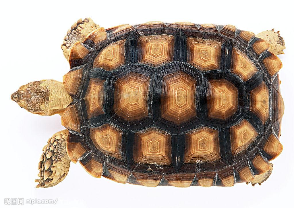 乌龟 海龟-cg模型网(cgmodel)-专注cg模型
