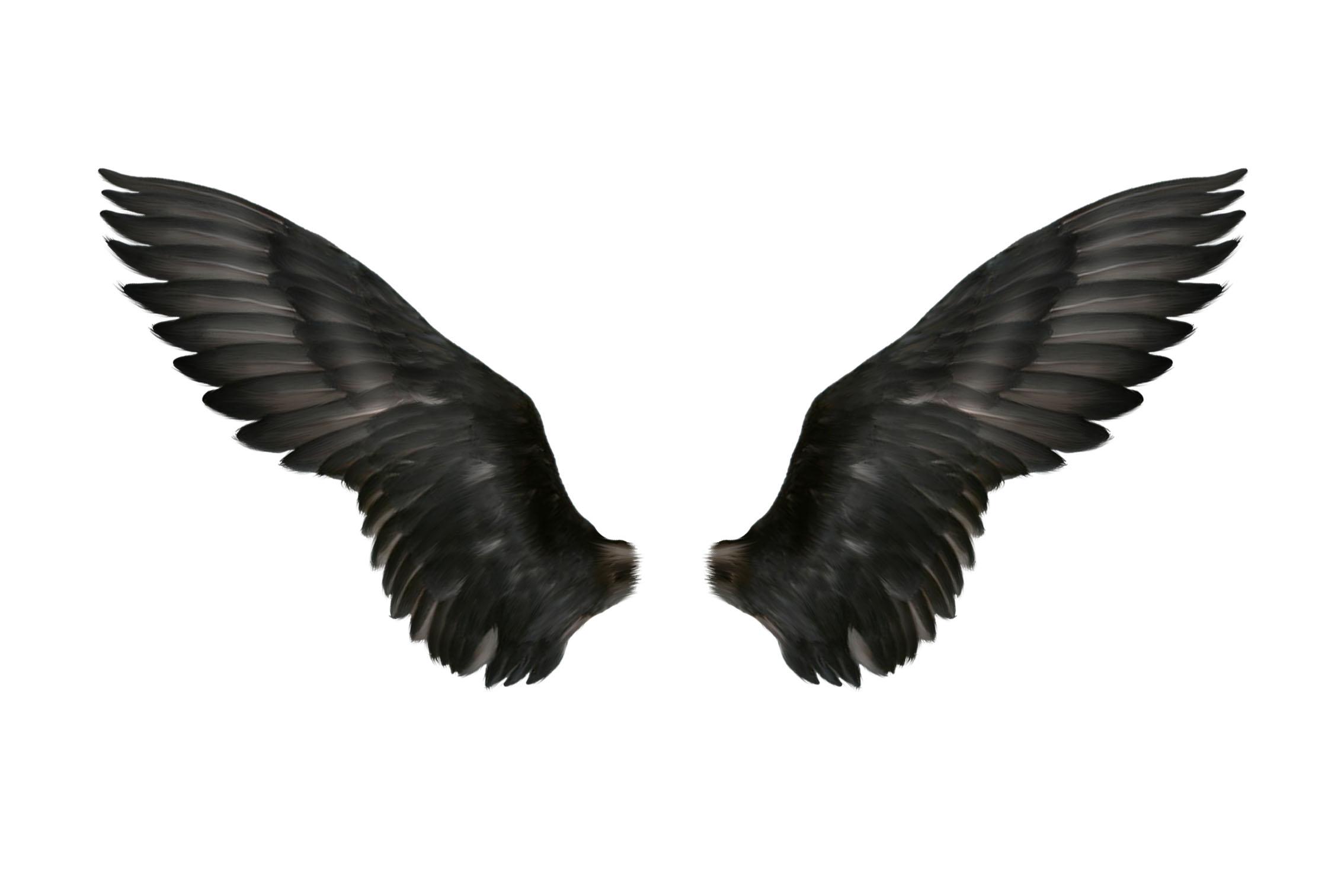 贴图素材 (翅膀)鄙人收藏的东西,较实用.