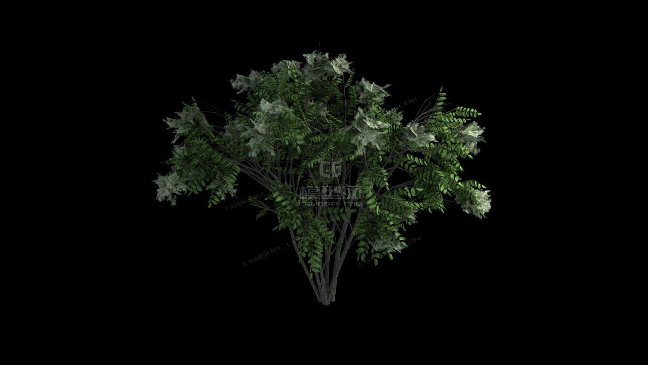 灌木 远景 小树 树丛-cg模型网(cgmodel)-让设计更有图片