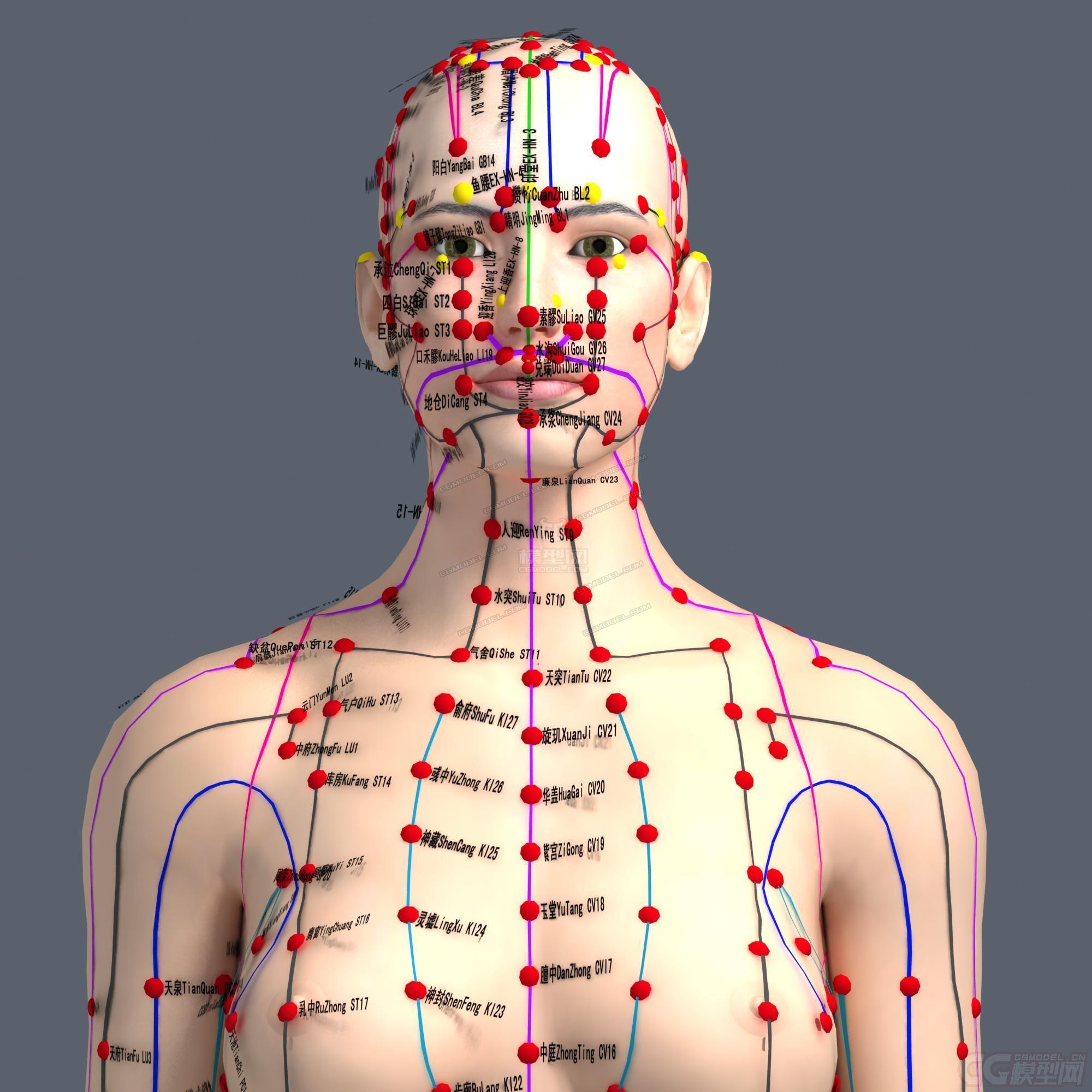 三维人体模型_经脉穴位女人体器官人体任督二脉女人基础人体静脉医疗用3d穴位 ...