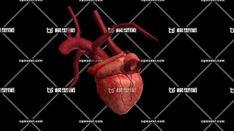 三维人体模型_写实心脏 人体器官 带动画 带内部结构 maya2014 fbx2010-人体器官 ...